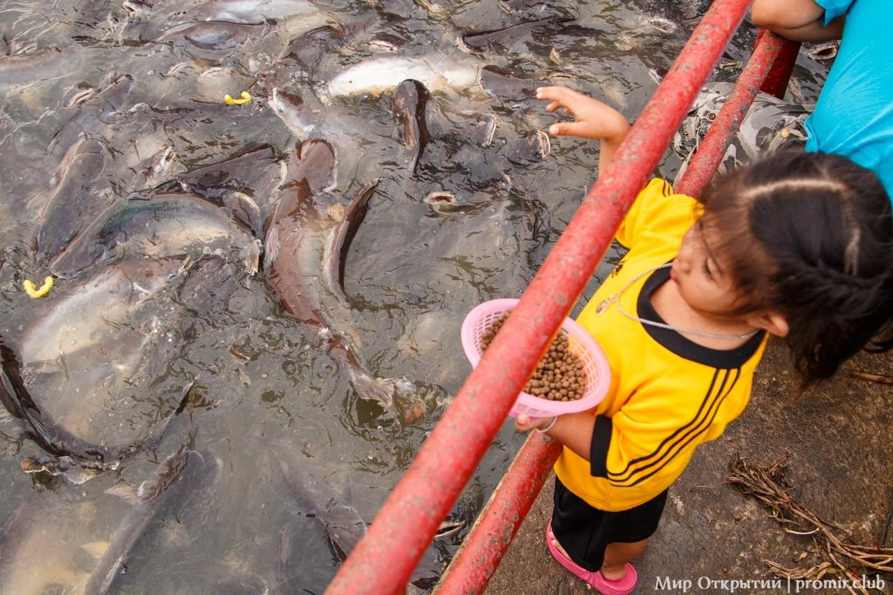 Кормление рыб в реке Чаупхрая, Аюттайя