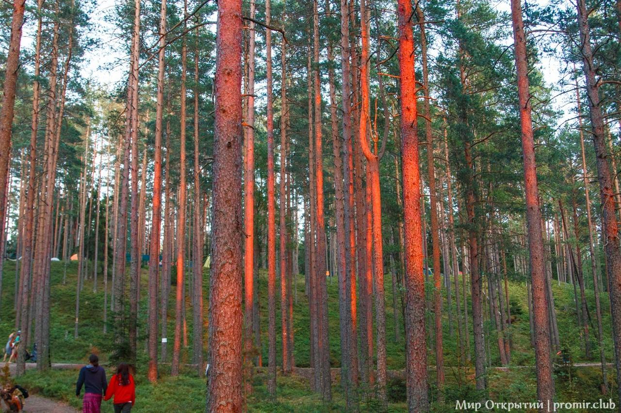 Лес на фестивале «YogArt», Ленинградская область