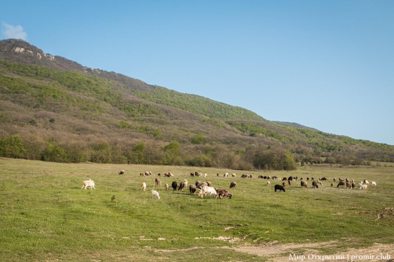 Горное пастбище, Байдарская долина, Крым
