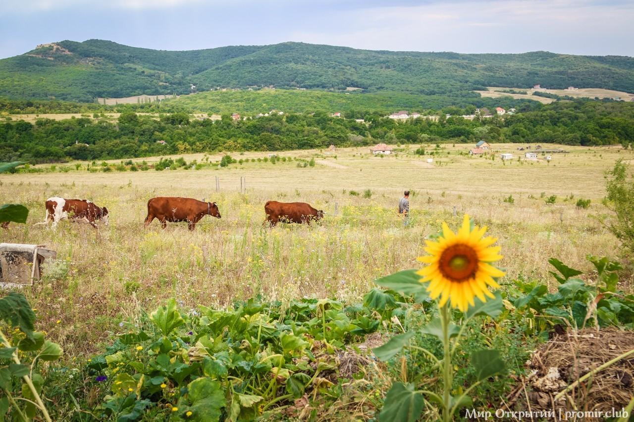 Панорама на поля, Краснолесье