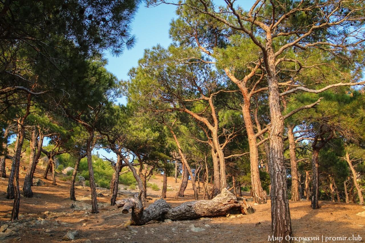 Сосновый лес, мысе Айя (Весеннее Путешествие по Крыму 2018 года)
